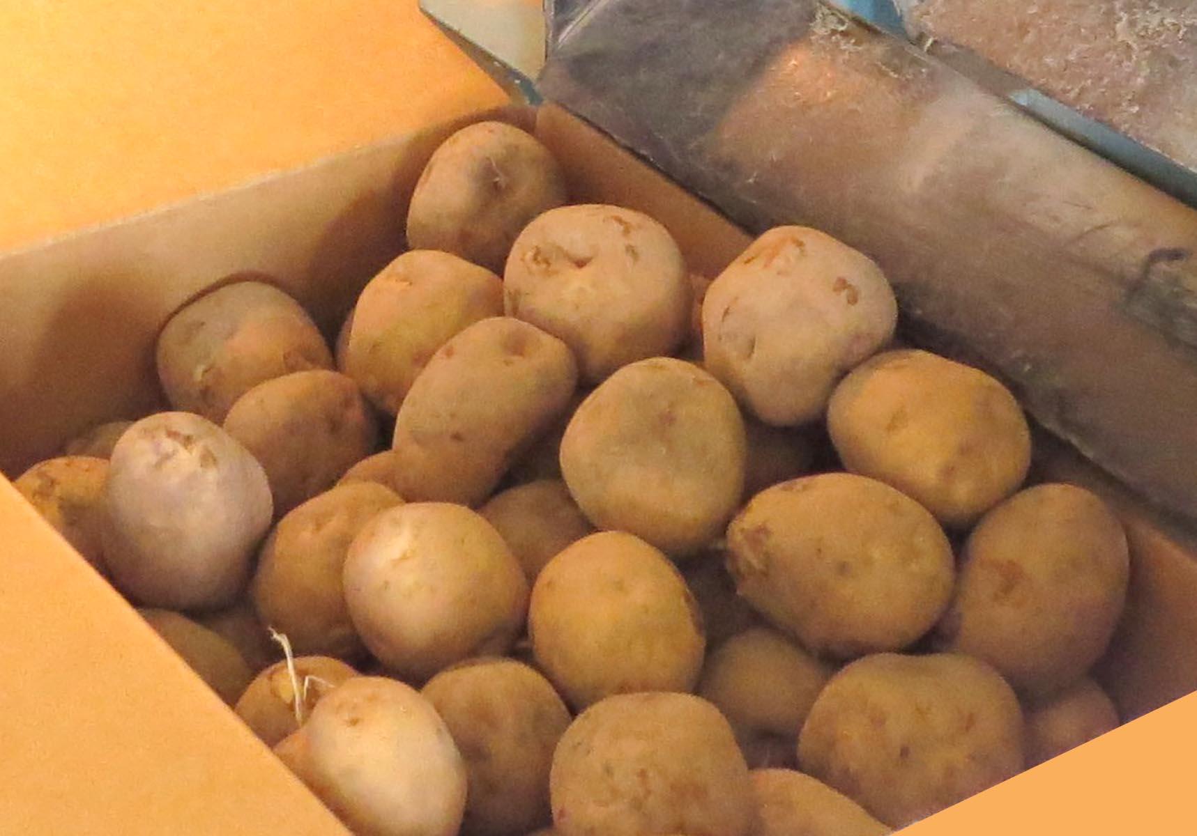 http://www.ja-kitaishikari.or.jp/contents/images/imo_l.jpg